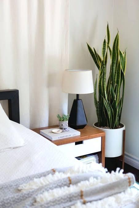 استفاده از گیاه سانسوریا در دکوراسیون اتاق خواب ساده و شیک