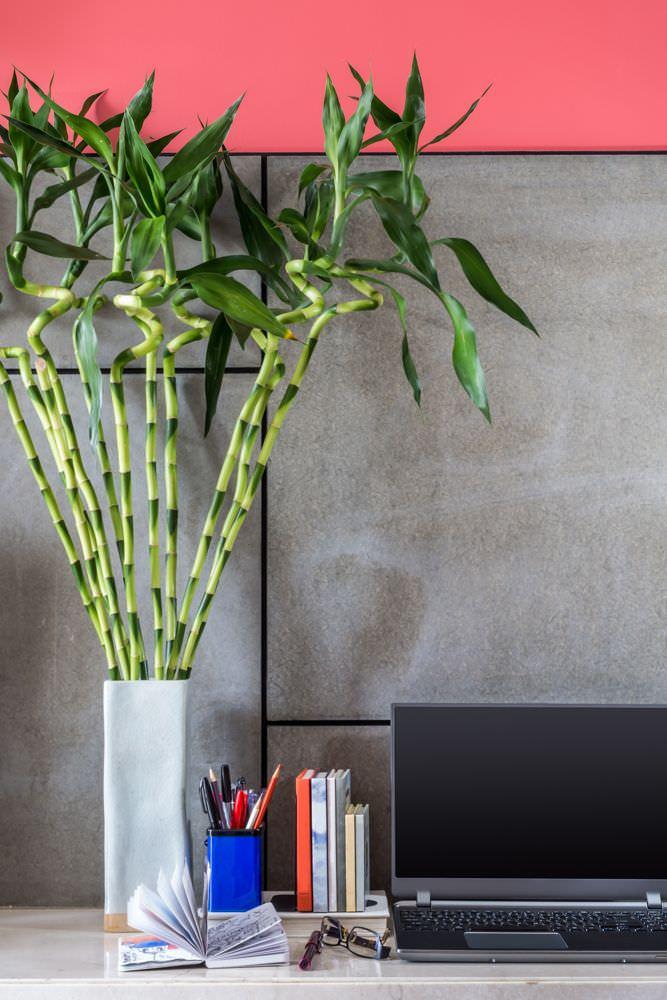 استفاده از گیاه بامبو برای فنگ شویی محل کار